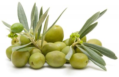 Olives vertes deco copie