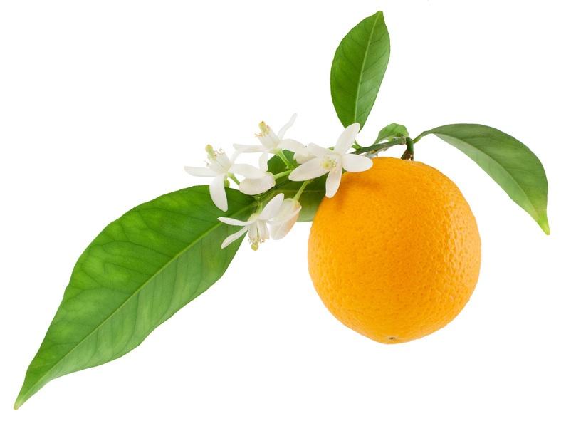 01 oranges feuilles 2 copie